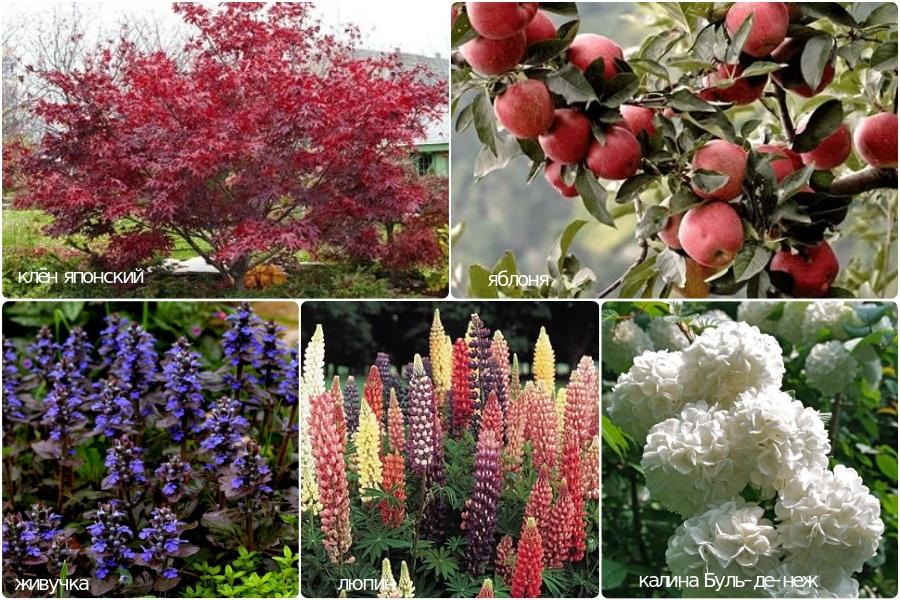 Растения для кислых и слабо-кислых почв