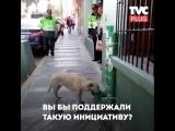 Как спасают собак в Перу