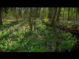 Мифы леса 01. Звериный рай и царство теней (2009) A1. Ю.Сербин 2.18 mkv