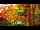 [HD] Autumn colors in Hakone 秋の箱根の紅葉名所 紅葉便り・花の名所案内 日本の秋
