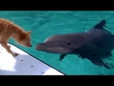 Demis Roussos - Follow Me Dolphin and Dog - Lets be Friends.