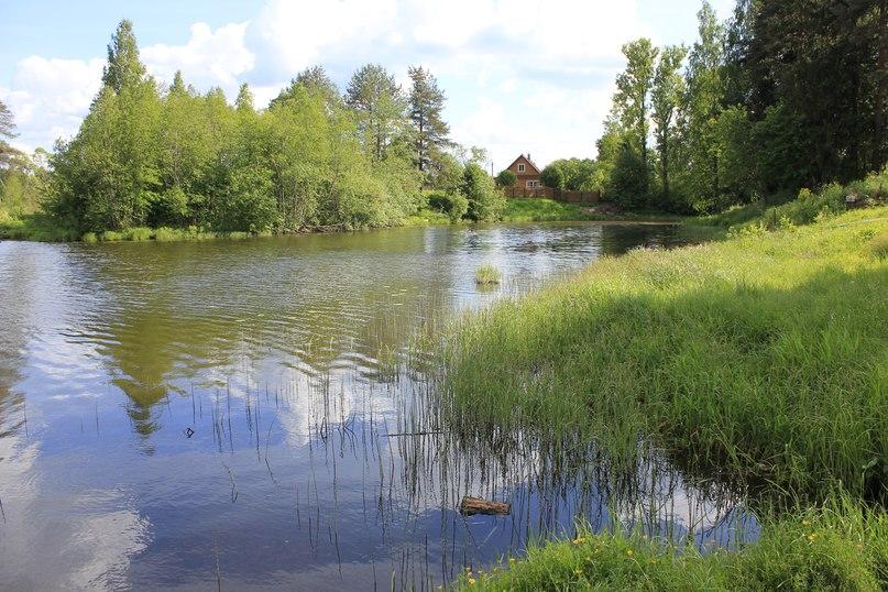 Река оредеж ленинградская область рыбалка