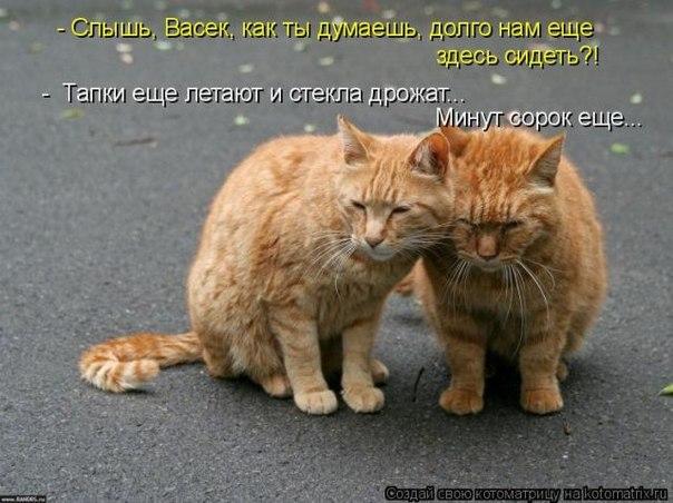 Без кошки нет дома без собаки двора
