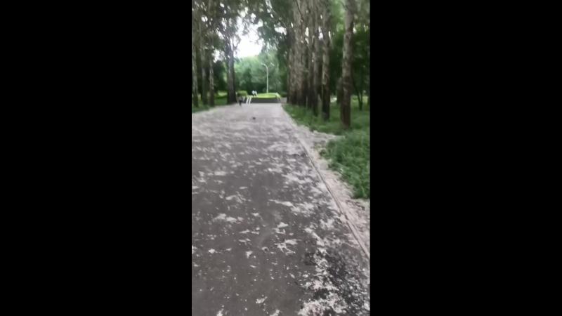 Ксюша идёт по парку. Тополиный пух.