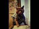 Shine cat-rock catPart 2Russian version