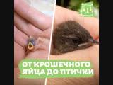 Парень помог птенцу появиться на свет