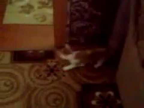 Нашел кота как его назвать 17 01 19г