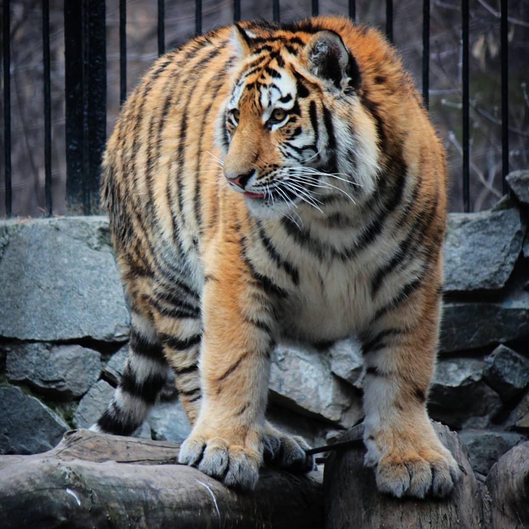 Зоопарки.. DWkDsSMJzzU