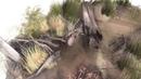 Paper bark История жизни вомбата