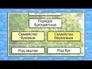 15. Основы систематики растений