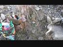 21 10 2018 г Классная рыбалка в черте города Магадана река Магаданка ловля форельки и кижуча