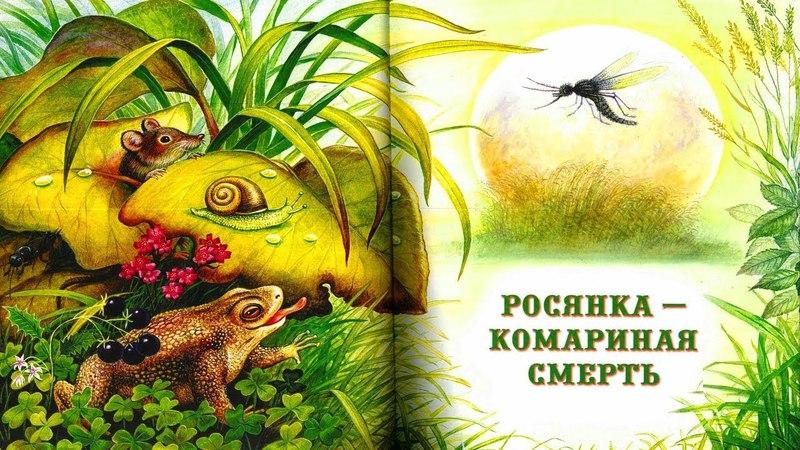КОМАРИНАЯ СМЕРТЬ Виталий Бианки аудио сказка Аудиосказки Сказки на ночь Слушать сказки онлайн
