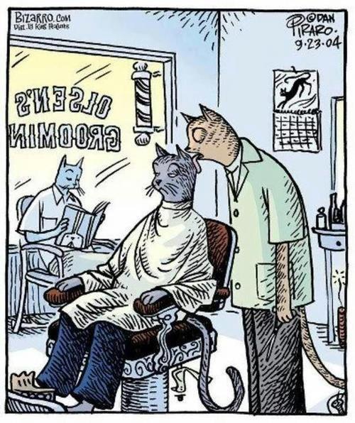 Парикмахерская для котиков