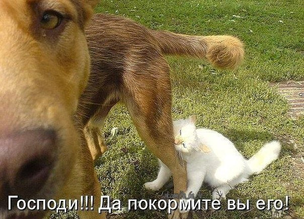 http://cs14107.vk.me/c408617/v408617211/5589/FNr-nk_zzGU.jpg