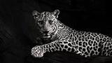 Space Motion - Jaguar (Original Mix)
