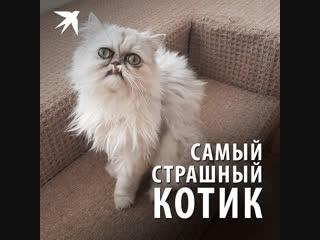 Самый страшный кот
