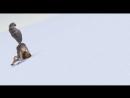 Отрывок из мультфильма «Ледниковый период»