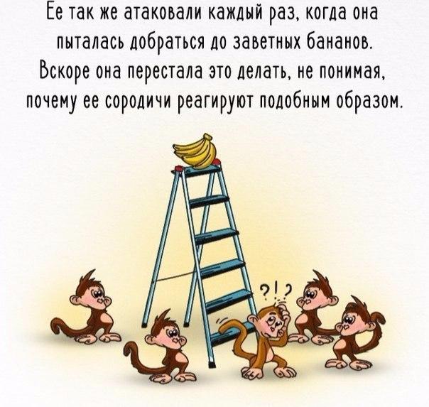 Как работает общество на примере обезьян и бананов