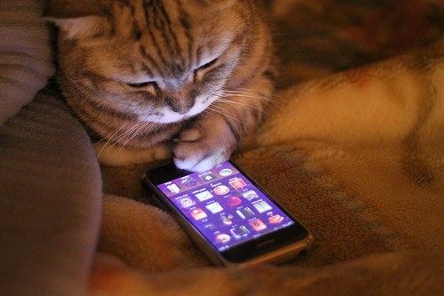 кошка с телефоном лежит красивая