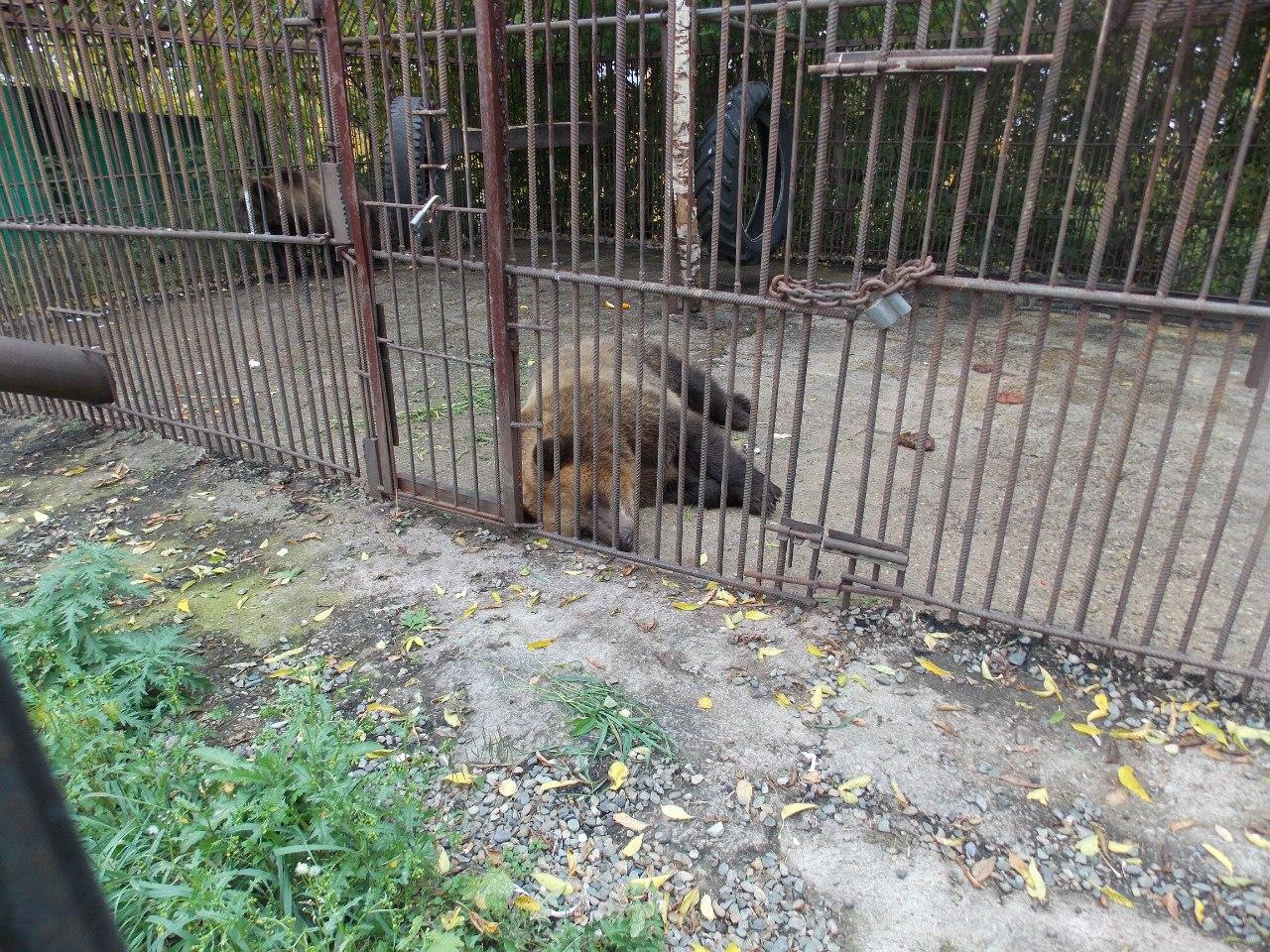 """Медведи в санатории """"Барнаульский"""""""