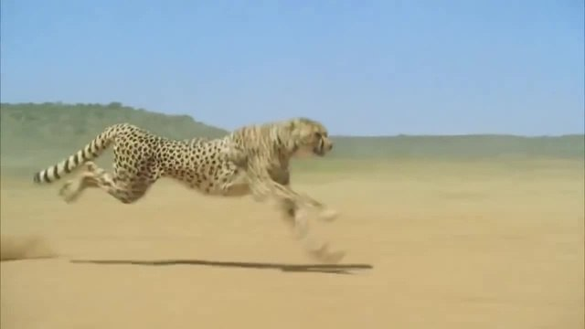 The fastest animal on the planet