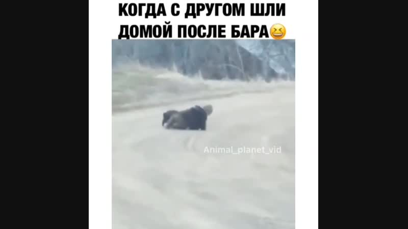 РЖАКА ЖЕСТЬ
