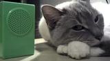 Prayer in C Lyrics with Cat
