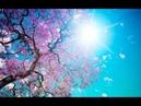 Супер Медитация Весеннего равноденствия 20 21 марта Лабиринт Жизни наполнение Жизненной Силой