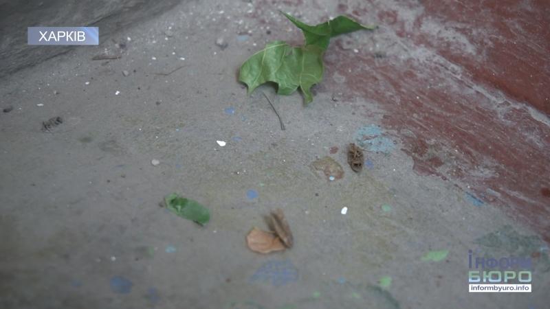 Миші, таргани та жахливий сморід мешканці будинку домагаються виселення сусідки-нечупари