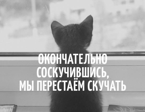 http://cs543106.vk.me/v543106400/2051b/seRTFpHLNQw.jpg