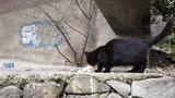 Кормление дворового кота