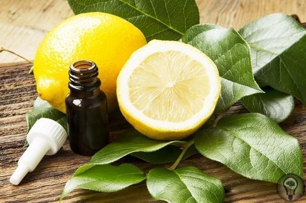 ЛИМОННЫЙ ЛЕЧЕБНИК РЕВМАТИЗМ Ежедневно пейте сок 1 - 2 лимонов, а также ешьте лимонную цедру, растертую с медом. Больные места обкладывайте пластинками разрезанной картошки и перебинтовывайте ее