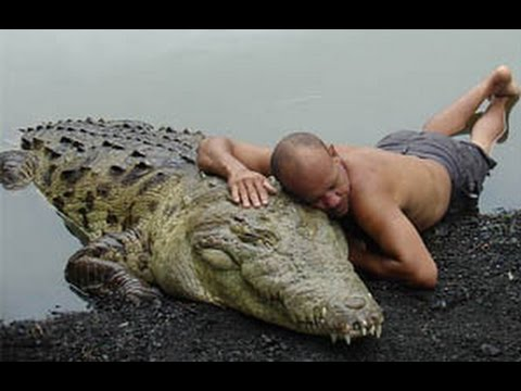 Friendship crocodile with the person. The only case in the world! / Very touching