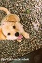 Собака - очень необычное создание. Она никогда не пристает с расспросами…