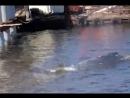 Кит в Финском заливе: гиганта заметили под Санкт-Петербургом