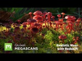 Create Realistic Moss with Megascans in Redshift