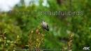 8 Hours of Beautiful Birds No Music 4K Nature Relaxation™ Washington State