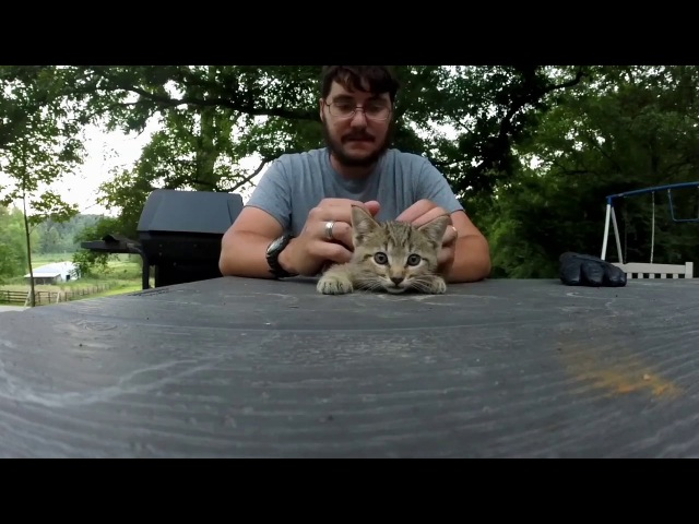 Taming a feral kitten