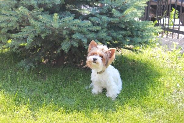 корм для щенков royal canin купить