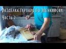 Разделка глухаря по Эвенкийски. Часть 2 [HD] Cutting wood grouse on the Evenki. part 2