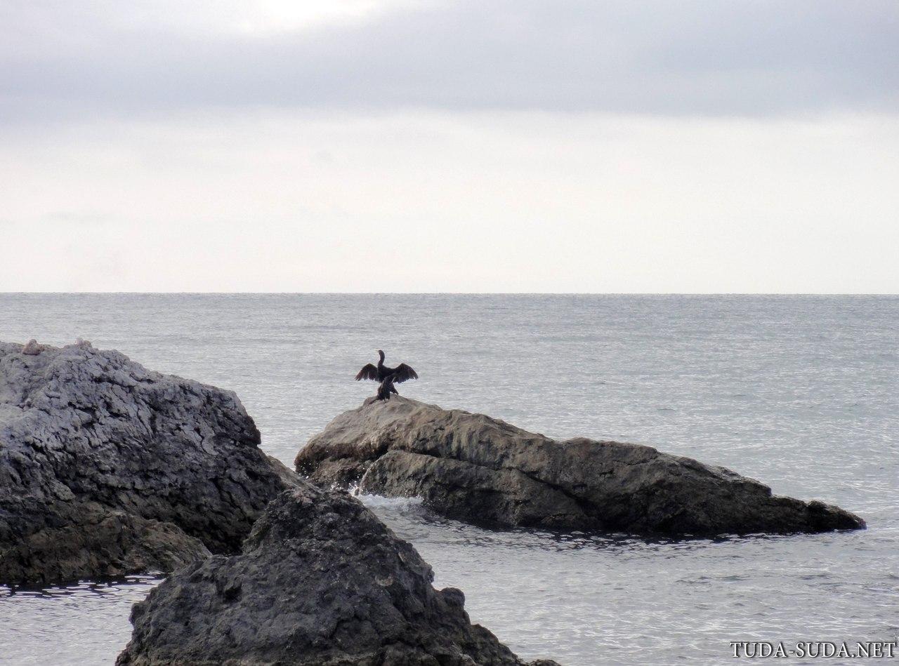 Птицы на море