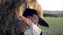 Kestrel fighting off a Jackdaw invasion
