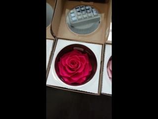 Роза в колбе новый бутоны .mp4