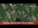 Общественники обнаружили масштабные вырубки карельских лесов