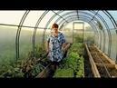 Во саду ли в огороде • Попробуйте Этот Способ И Будете С Урожаем До Самых Морозов!