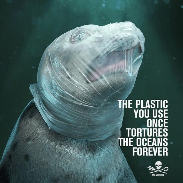 По всему миру запустили акцию о защите окружающей среды, которая не оставит вас равнодушным. Международная организация «Общество охраны морской фауны» (SSCS) совместно с рекламными агенствами