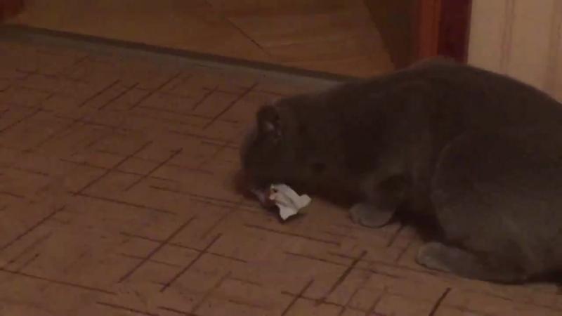 Кот Бася и Батончик