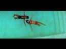 Richard Orlinski And Glaam feat Big Ali Luv 1