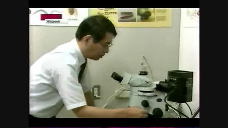 Японцы вырастили сетчатку (2012)