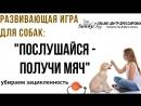 Развивающая игра для собак Послушайся получи мяч